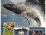 Pick N Pull Vancouver northern Vancouver island Visitors Guide by north island Gazette