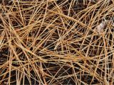 Pine Straw Cumming Ga Using Pine Straw to Mulch Your Beds In Cumming Ga