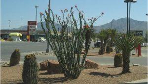 Plant Nursery El Paso Texas El Paso Landscaping