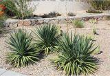 Plant Nursery El Paso Texas why Native Plants El Paso County Master Gardeners