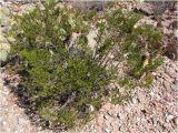 Plant Nursery El Paso Tx Native Flora In El Paso Cactiguide Com