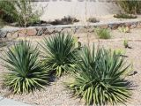 Plant Nursery El Paso Tx why Native Plants El Paso County Master Gardeners