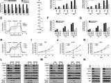 Red River Nm events Next 14 Days Enhanced Glycolysis Supports Cell Survival In Egfr Mutant Lung