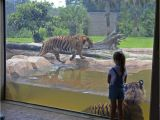Rent to Own Houses In Baton Rouge Louisiana Consultants Again Urge Brec to Consider Relocating Baton Rouge Zoo