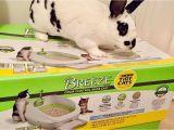 Reviews On Breeze Litter Box Breeze Litter Box Tava An Baka Ma 11 Bolum Youtube