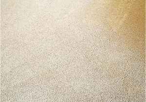 Rug Cleaning Midlothian Va Royalty Carpet Cleaning Midlothian Va Www Stkittsvilla Com