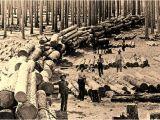 Sawmills In East Texas the Bonanza Era southeast Texas Sawmill Heritage the