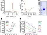 Spectrum Labs Quick Fix Plus Reviews 2019 A Trpv1 to Secretagogin Regulatory Axis Controls Pancreatic I Cell