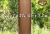 Squirrel Baffle for 4×4 Post Post Raccoon Tan Baffle at Backyard Wild Birds