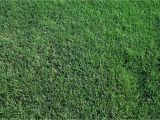 St Augustine Grass San Antonio 419 Tifway Bermuda without the Middle Man Mark Up Farm to Home