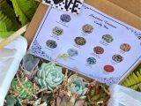 Succulent Treasures Candy Box Pre order Valentine Love Succulent Treasures Deluxe Candy