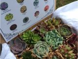 Succulent Treasures Candy Box Succulent Treasures Candy Box the original by