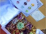 Succulent Treasures Candy Box Succulent Treasures Candy Box the original Etsy Box A Dozen