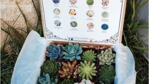 Succulent Treasures Candy Box Succulent Treasures Candy Box the original Etsy Box A Dozen