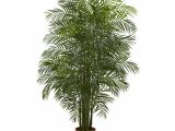 Tall Fake Palm Trees for Sale Nearly Natural areca Palm Tree In Pot Reviews Wayfair