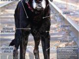 Tienda De Mascotas En Miami 8 Mejores Imagenes De Pets En Pinterest Guardera A Para Perros