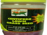 Tifblair Centipede Grass Seed Centipede Grass Seed Lawn Care the Home Depot