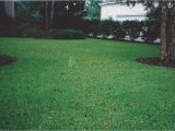Tifblair Centipede Grass Seed Grass Varieties A Superior sod Mulch and sod In