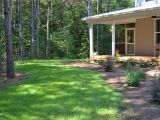 Tifblair Centipede Grass Seed Tifblair Centipede Grass Seed Revolutionhr