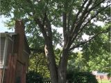 Tree Service Kettering Ohio Dayton Tree Service Coupons Near Me In Springboro 8coupons