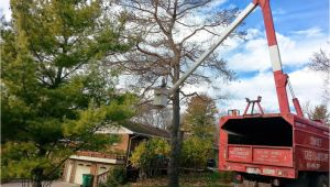 Tree Service Kettering Ohio Services Dayton Centerville Bellbrook Oh Sunset Tree