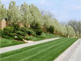 Tree Service Lawrence Ks Lawn Tree Treatments In Lawrence Kansas Landscapers In Ks