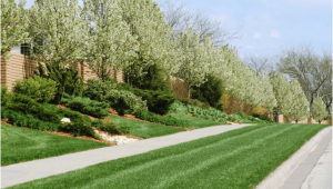 Tree Service Lawrence Ks Lawn Tree Treatments In Lawrence Kansas Landscapers In Ks