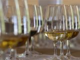 True north Wine Glass Best Spanish Drinks to Try In Spain with Translations