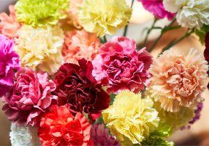 Types Of Filler Flowers 13 top Varieties for Cut Flowers