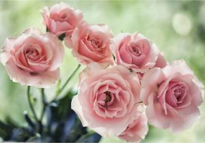 Types Of Filler Flowers Filler Flowers for Wedding Bouquets