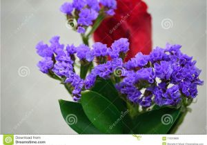 Types Of Filler Flowers Purple Statice with Red Rose Stock Image Image Of Flower Flora