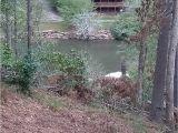 Types Of Grass In Georgia Coosawattee River Resort Campground Reviews Ellijay Ga