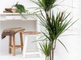 Types Of House Palm Trees Indoor Palm Images which are the Typical Types Of Palm
