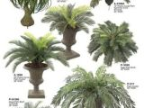 Types Of House Palm Trees Palm Tree Types as Houseplants Hardy Exotic solutions
