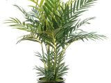 Types Of Indoor Palm Trees Pictures Indoor Palm Images which are the Typical Types Of Palm