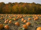 U Pick A Part St Louis where to Pick Pumpkins In the St Louis area