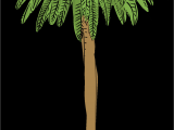 Used Fake Palm Trees for Sale L A S Palm Trees are Dying and It S Changing the City S Famous
