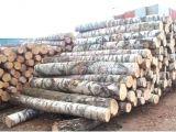 White Birch Logs Lowes White Birch Wood Logs Fireplace Insulation Panel Surga Info