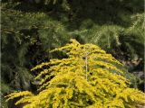 Wissel S Saguaro False Cypress 124 Best Gardens Images On Pinterest Landscaping Plants and