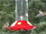 World S Best Hummingbird Feeder Bird Houses for Sale Buying Tips
