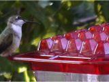World S Best Hummingbird Feeder Kscanuck