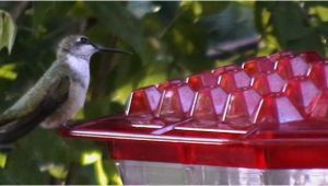 World S Best Hummingbird Feeder Kscanuck
